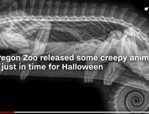 X-rays provide creepy new views of zoo animals