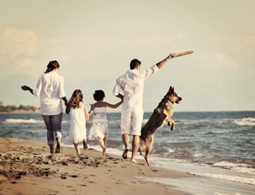 Having a dog offers you myriad benefits at any age or stage of life?