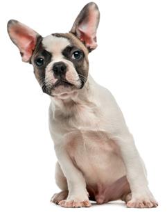 vet_doggy