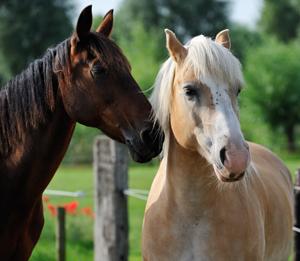 polygon_vet_equine1